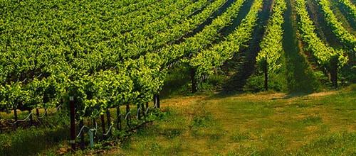 Santa Barbara Wine Tour Company Highlights Italian Restaurants